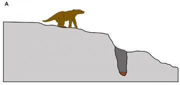 A imagem é uma figura esquemática, que mostra uma preguiça terrestre gigante andando em direção a um buraco no chão.